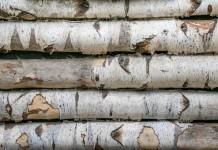 Vorteile Nachteile von Birkenholz