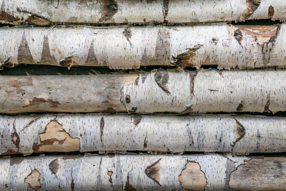 vorteile und nachteile von birkenholz ratgeber haus garten. Black Bedroom Furniture Sets. Home Design Ideas