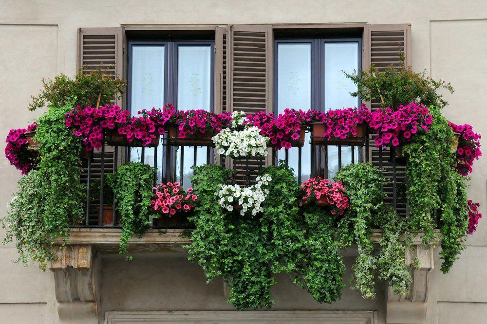 balkonpflanzen ratgeber ratgeber haus garten. Black Bedroom Furniture Sets. Home Design Ideas