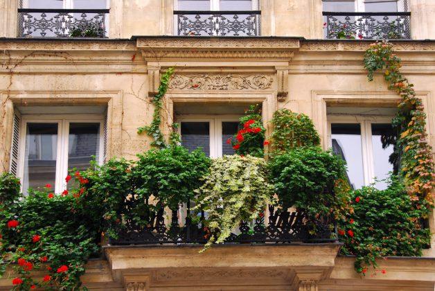 Balkonpflanzen ratgeber ratgeber haus garten - Ratgeber haus garten ...