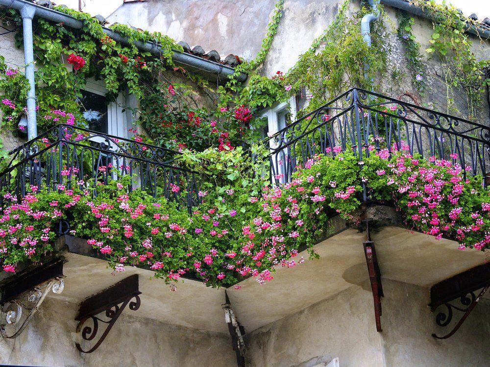 Balkonpflanzen Ratgeber Ratgeber Haus Garten