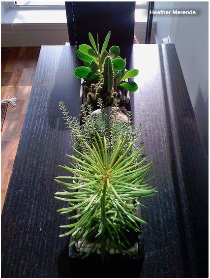 Kaktus als dekoration ratgeber haus garten for Esszimmertisch deko