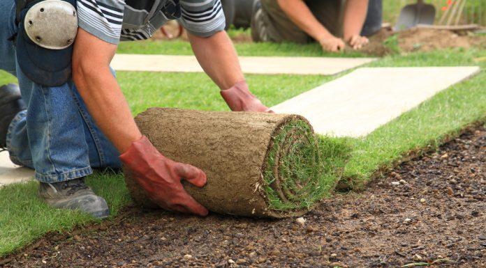 Rasenpflege im Frühling - Rollrasen verlegen