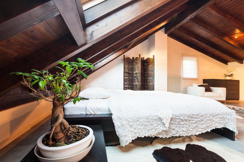 ratgeber zimmerpflanzen wo sich zimmerpflanzen wohl f hlen. Black Bedroom Furniture Sets. Home Design Ideas