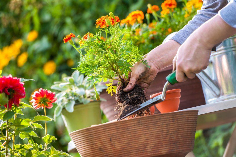 Gartenarbeiten im mai ratgeber haus garten - Gartenarbeiten im mai ...