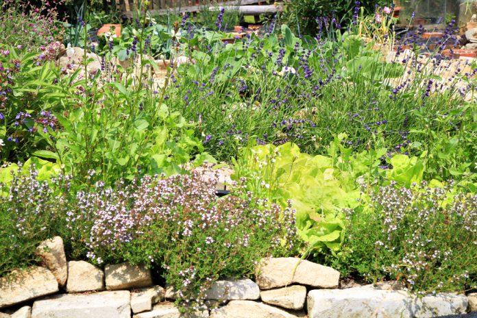 Krautergarten Pflegen Und Gestalten Ratgeber Haus Garten