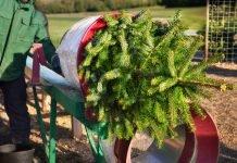 Tipps Weihnachtsbaum kaufen Netz Verpacken