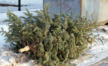 Weihnachtsbaum Wegwerfen Entsorgen Verwerten