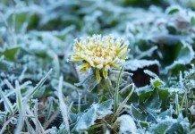 Eisheilioge Frost Pflanzen Garten