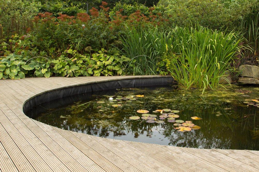 Der Gartenteich - ein Highlight und Biotop · Ratgeber Haus & Garten