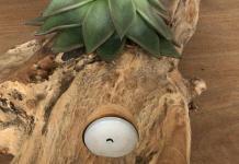 Luftpflanzen (Tillandsien) und Sukkulenten auf Schwemmholz Dekoration