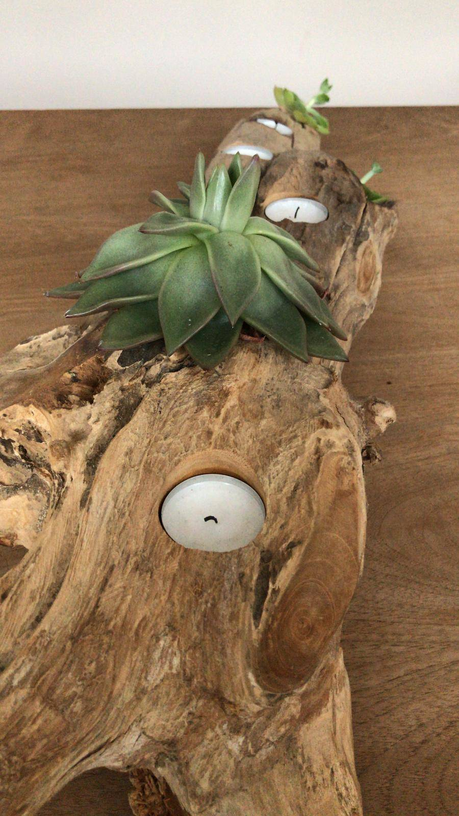 Luftpflanzen (Tillandsien) - Diese Pflanzen leben von Luft und Liebe